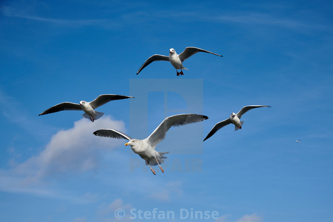 """a flock of seagulls in blue sky with some clouds"" stock image"
