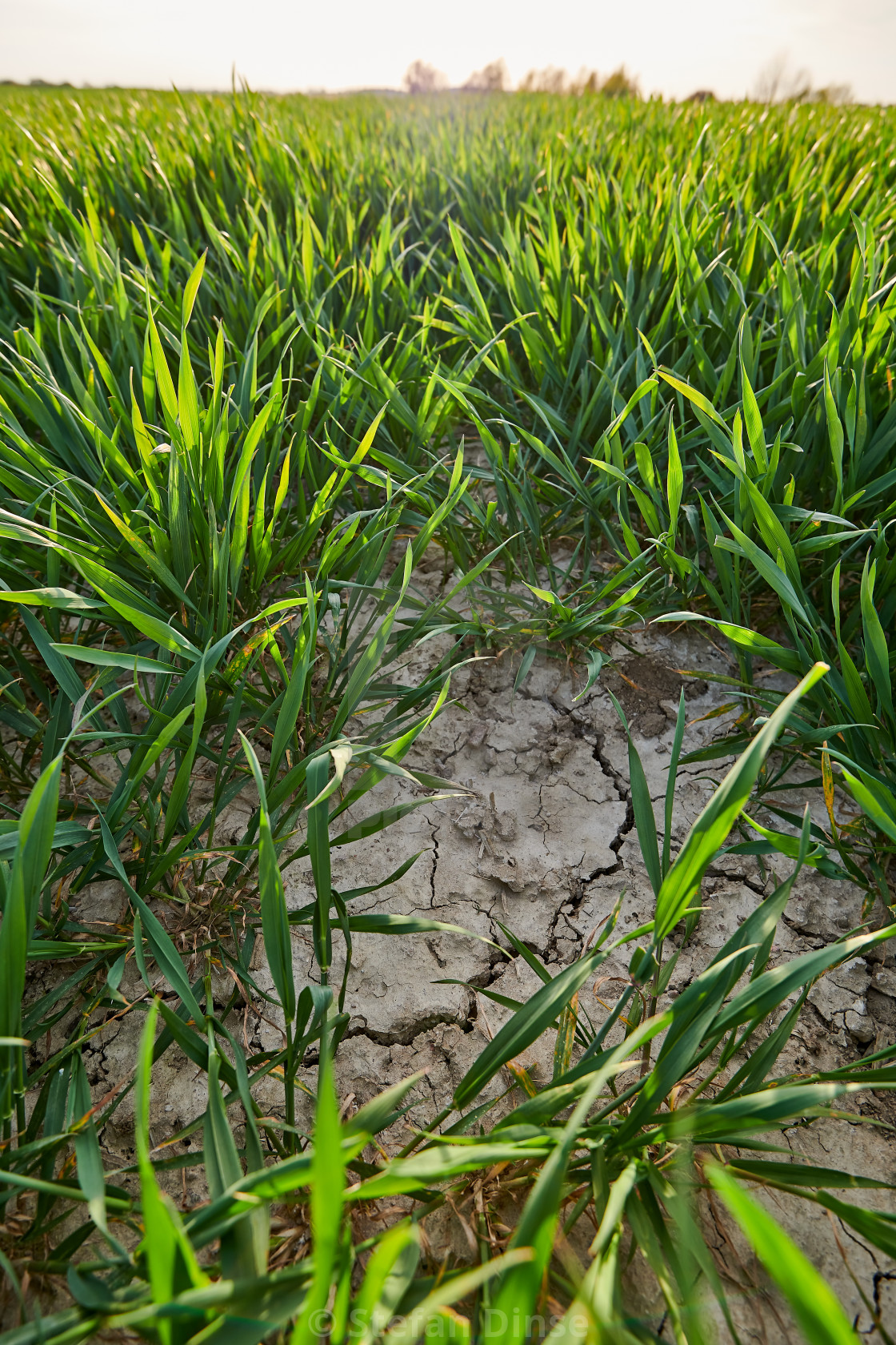 """""""dry and cracked soil on farming land"""" stock image"""