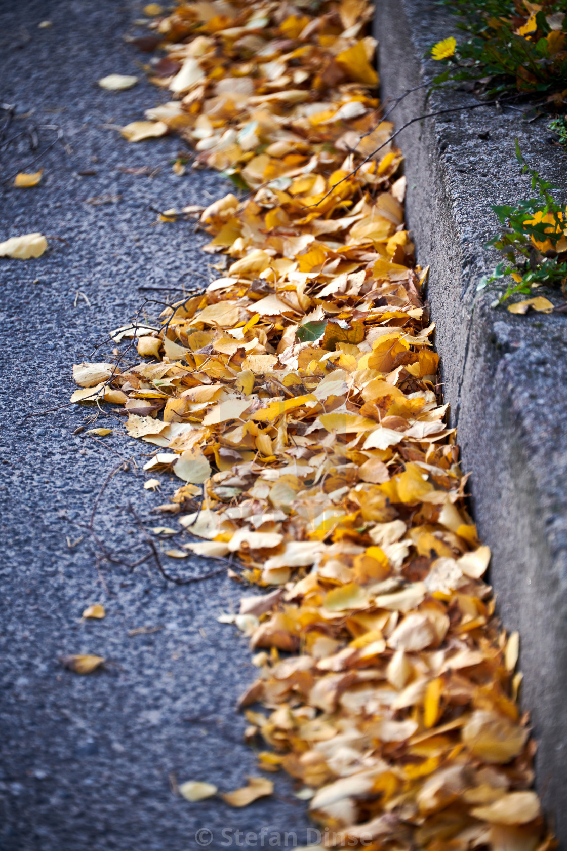 """Yellow birch leaves at the roadside in autumn"" stock image"