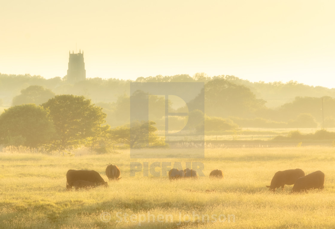"""Grazing in the evening light"" stock image"