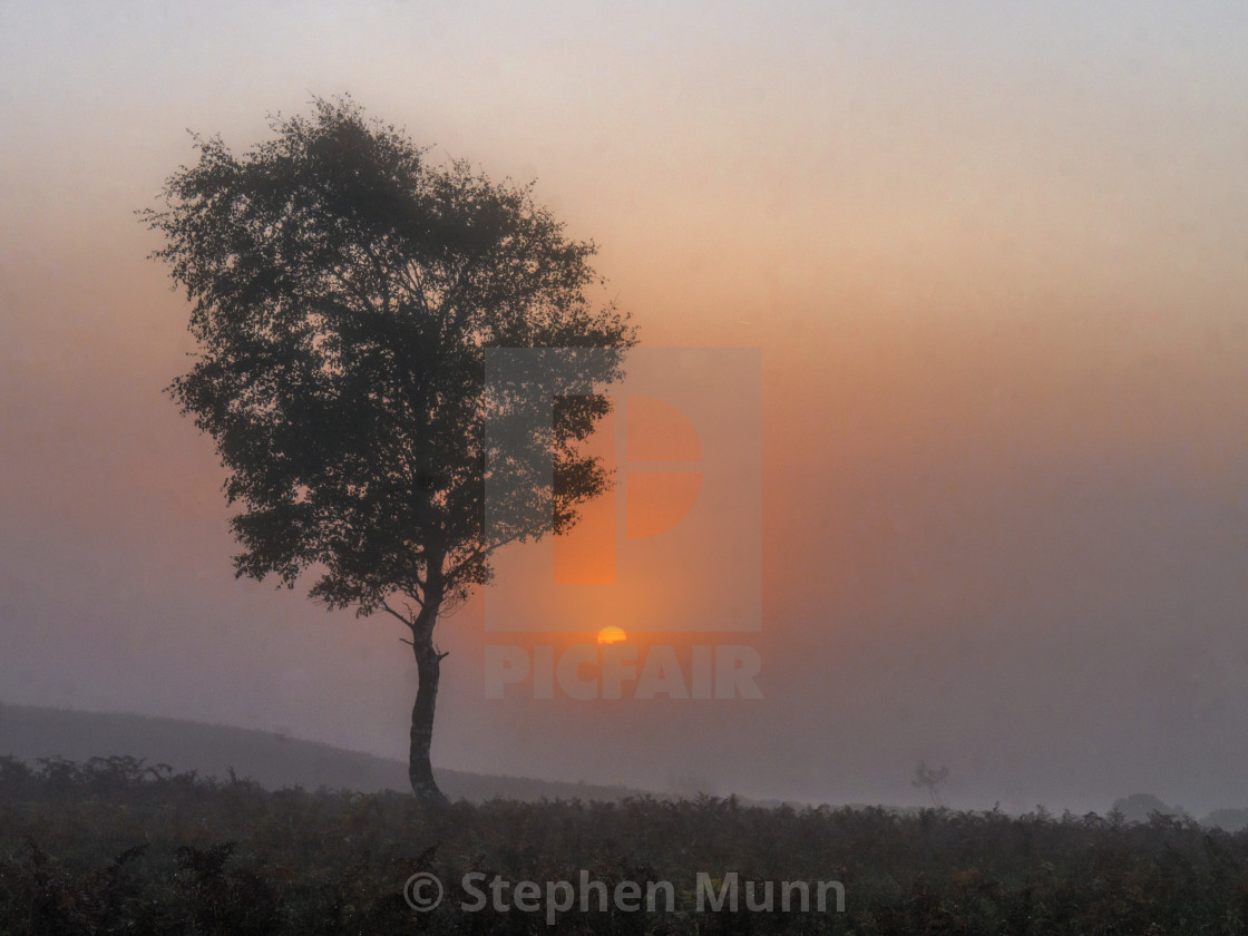 """""""Fog on the New Forest"""" stock image"""