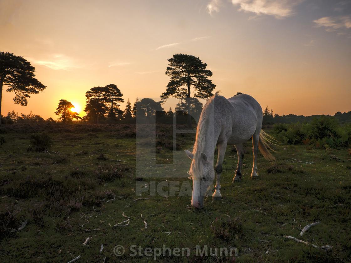 """Rockford Common Dawn Horse"" stock image"