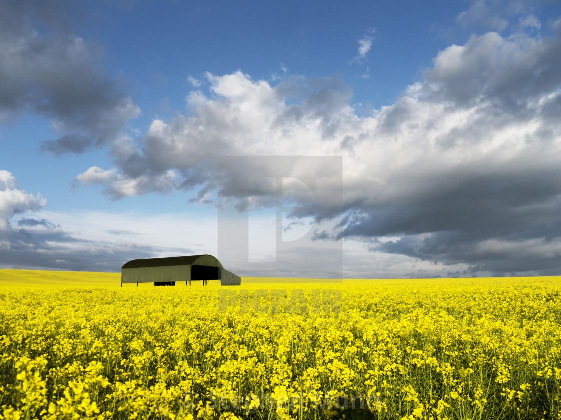"""""""Rape field barn"""" stock image"""