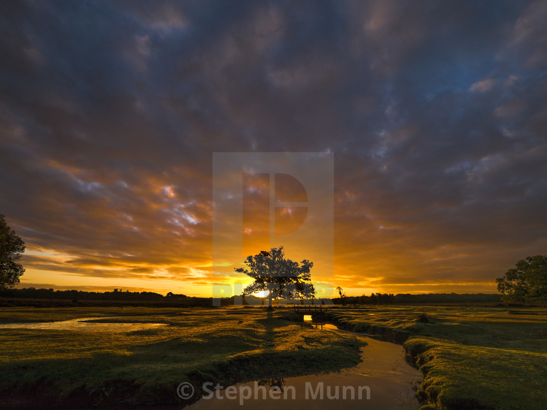 """""""New Forest Dawn"""" stock image"""