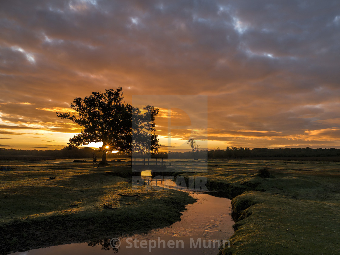"""""""Runner at Dawn, New forest"""" stock image"""