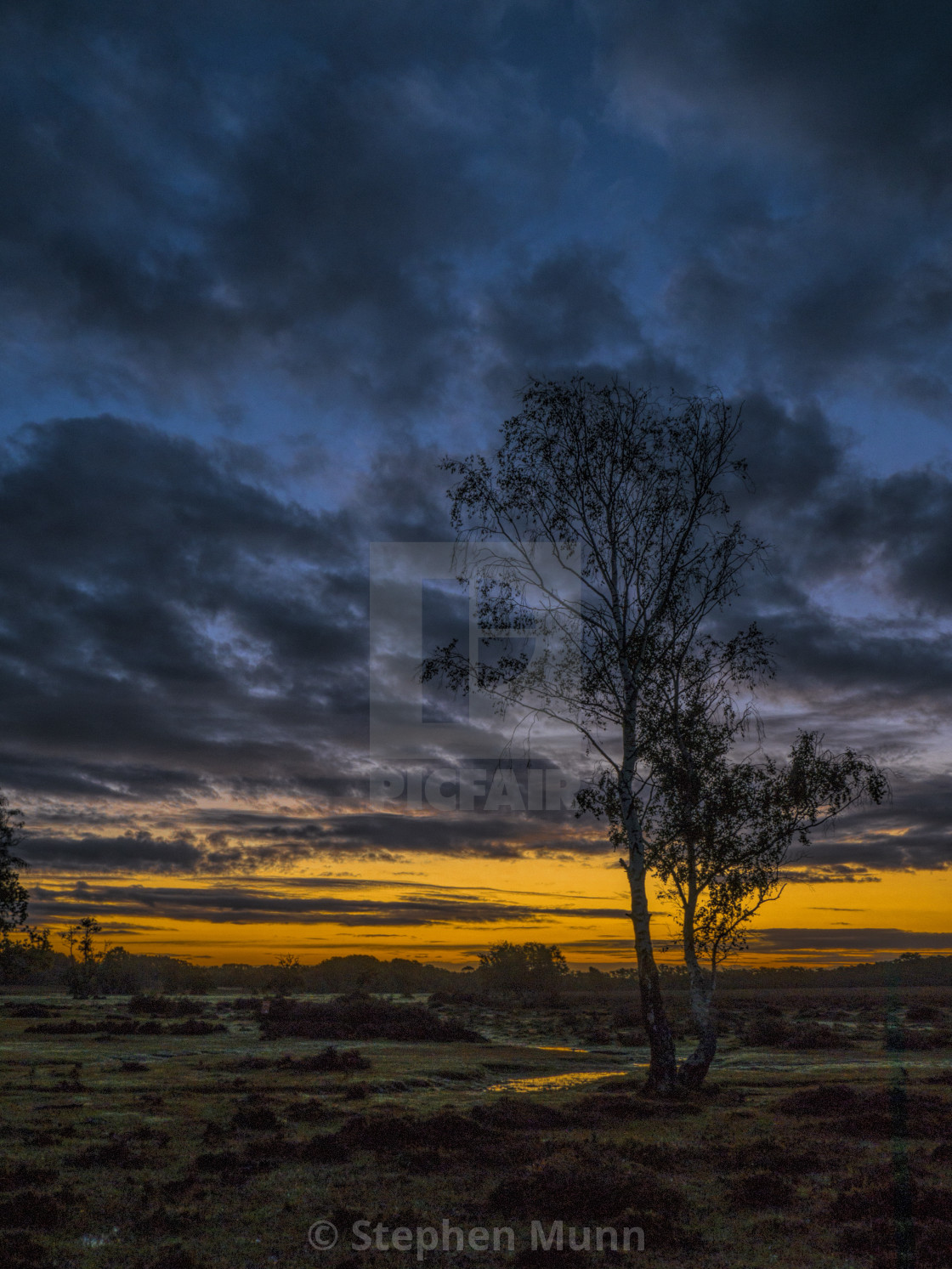 """""""Breaking Dawn, New Forest National Park"""" stock image"""