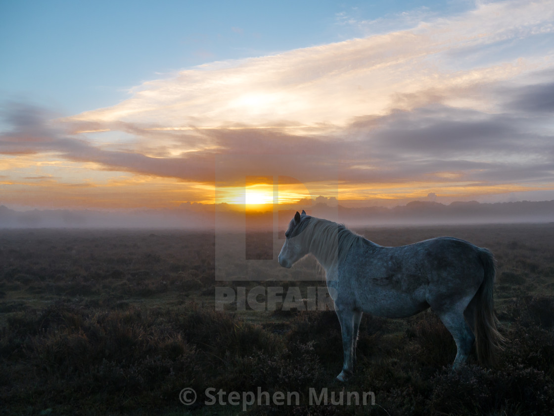 """Pony at sunrise, New Forest National Park"" stock image"