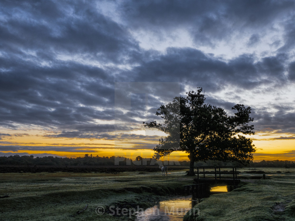 """""""Sunrise over a river, New Forest National Park"""" stock image"""
