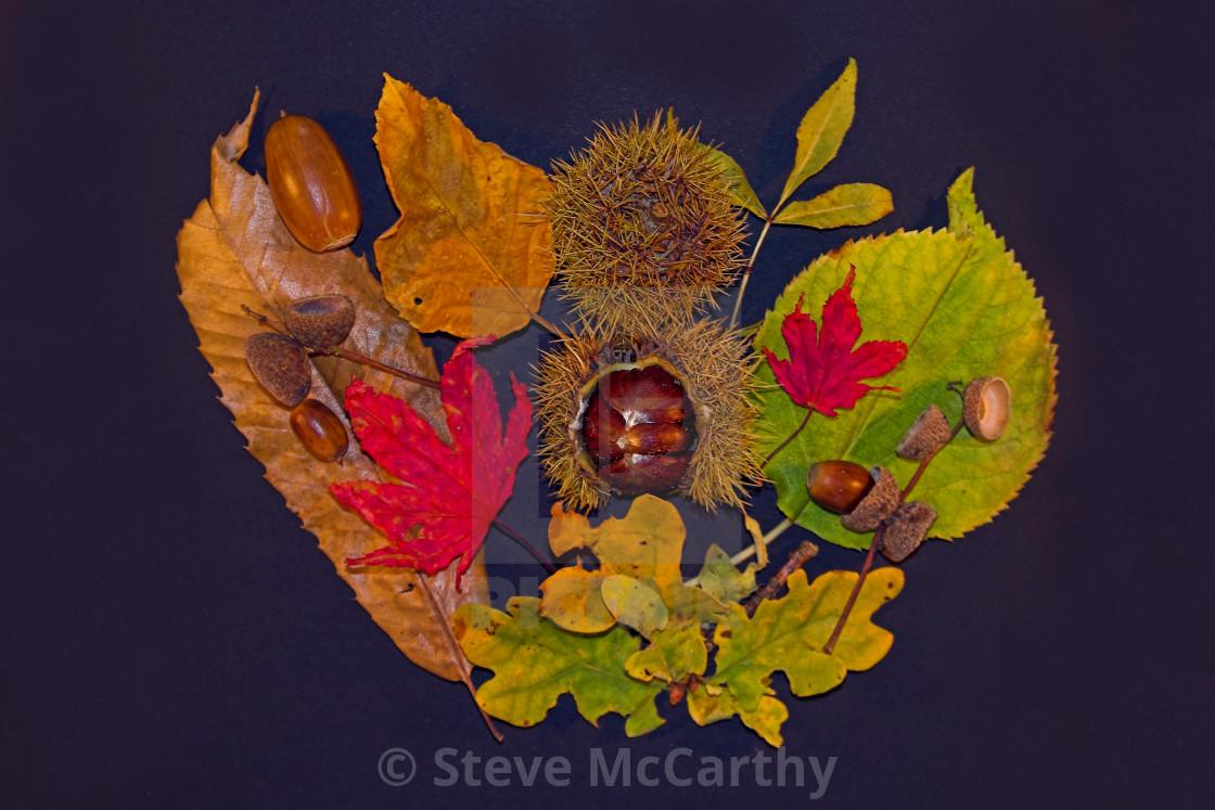 """Autumn fruits"" stock image"