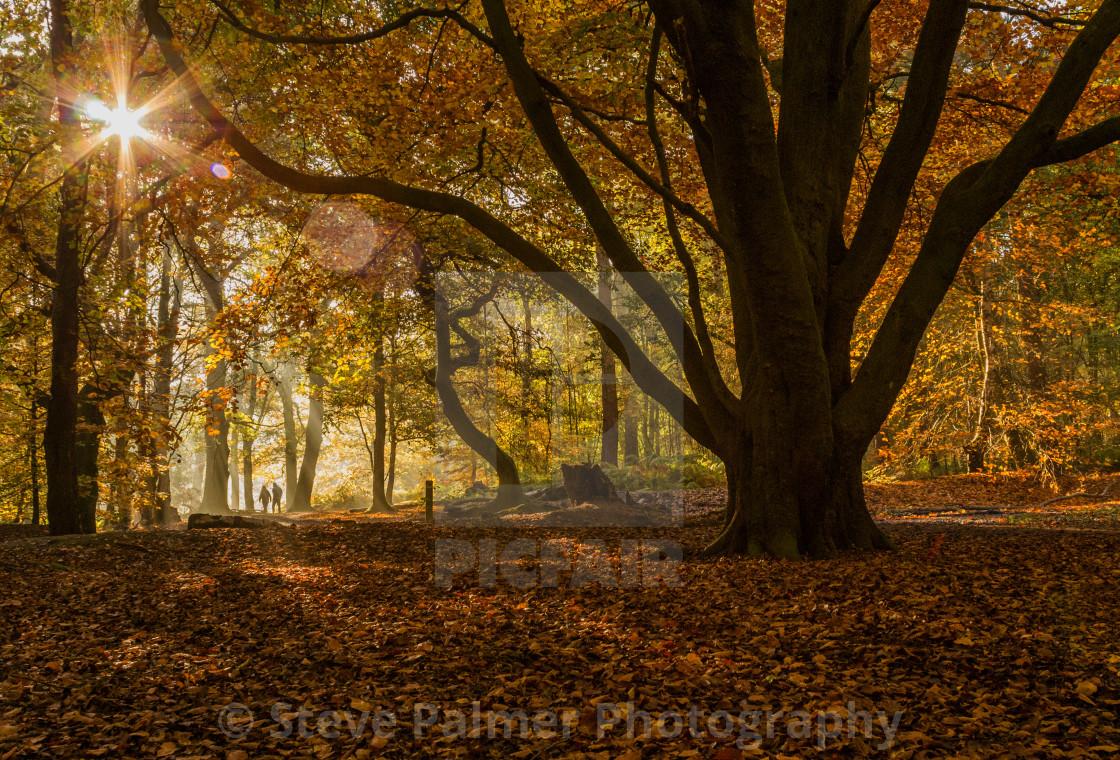 """""""Autumn Woodland"""" stock image"""