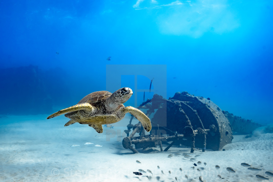 """Hawaiian Sea Turtle Flying By"" stock image"