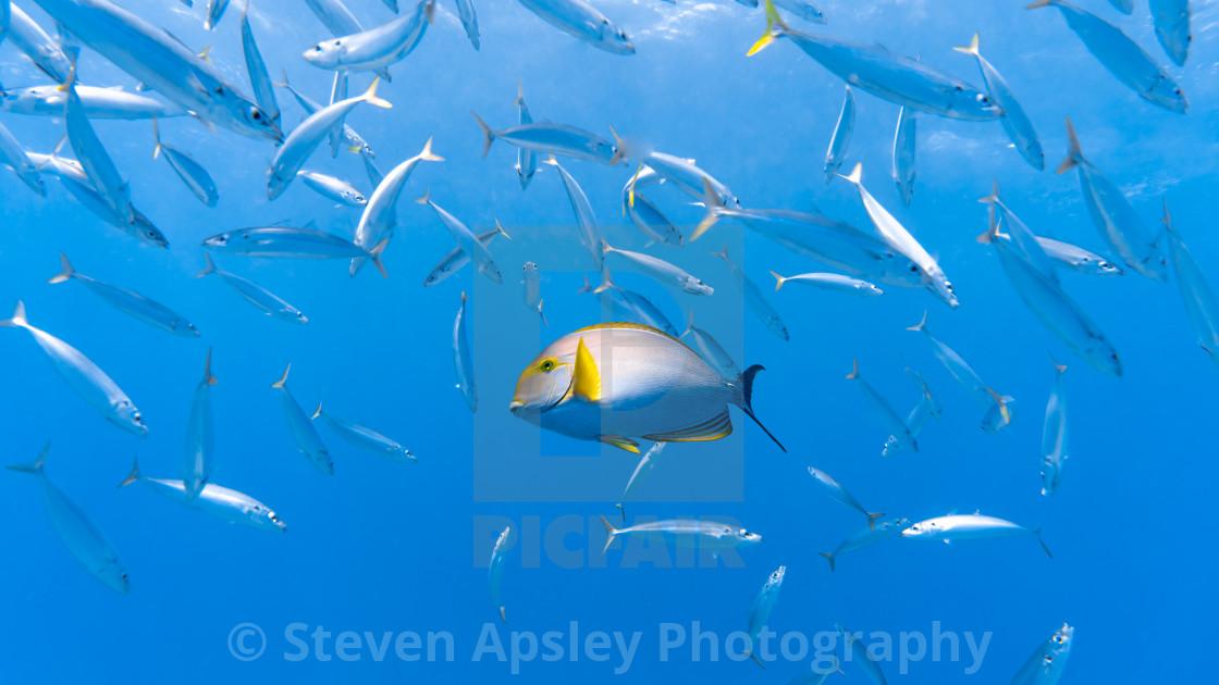 """Tropical Fish"" stock image"