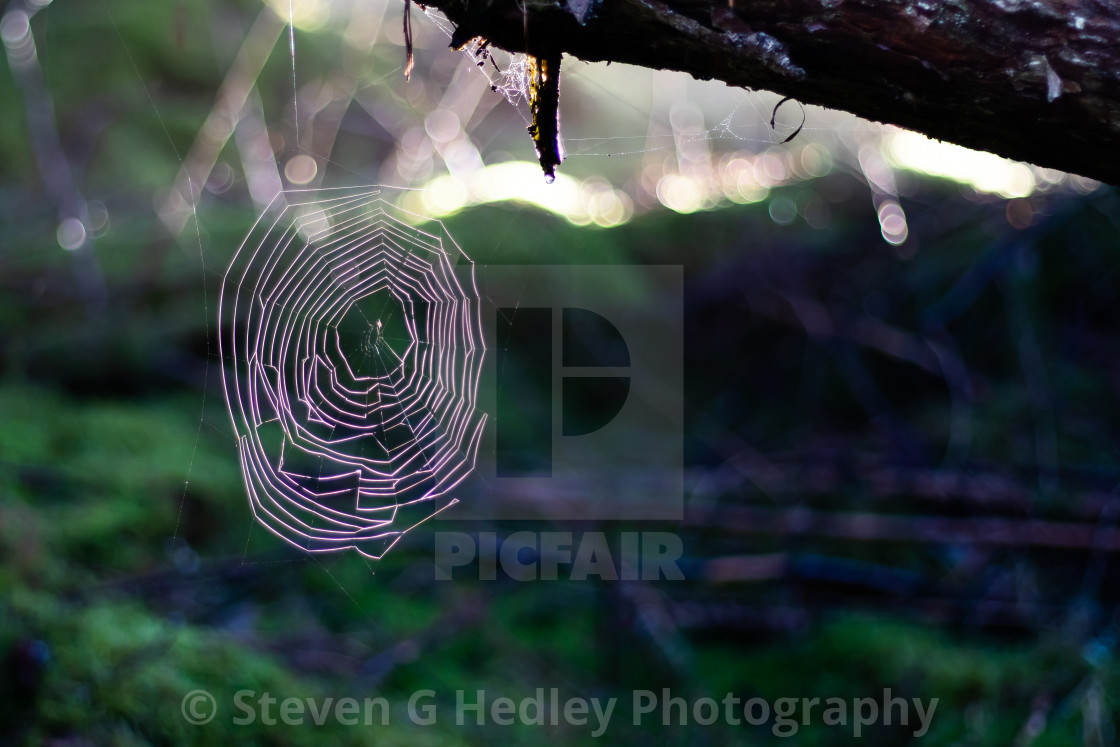 """""""Spiders Web caught at Sunrise"""" stock image"""