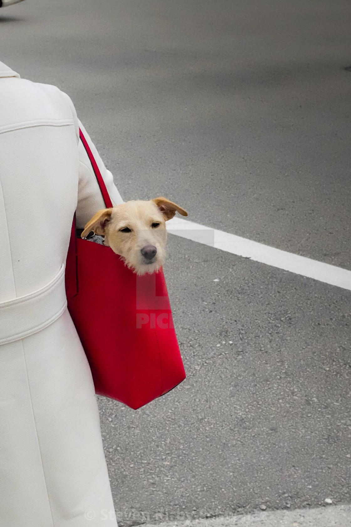 """Dog in Red Handbag"" stock image"