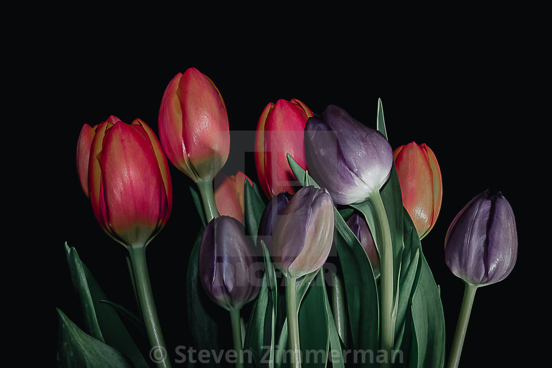 """Flowers in My Studio Five"" stock image"