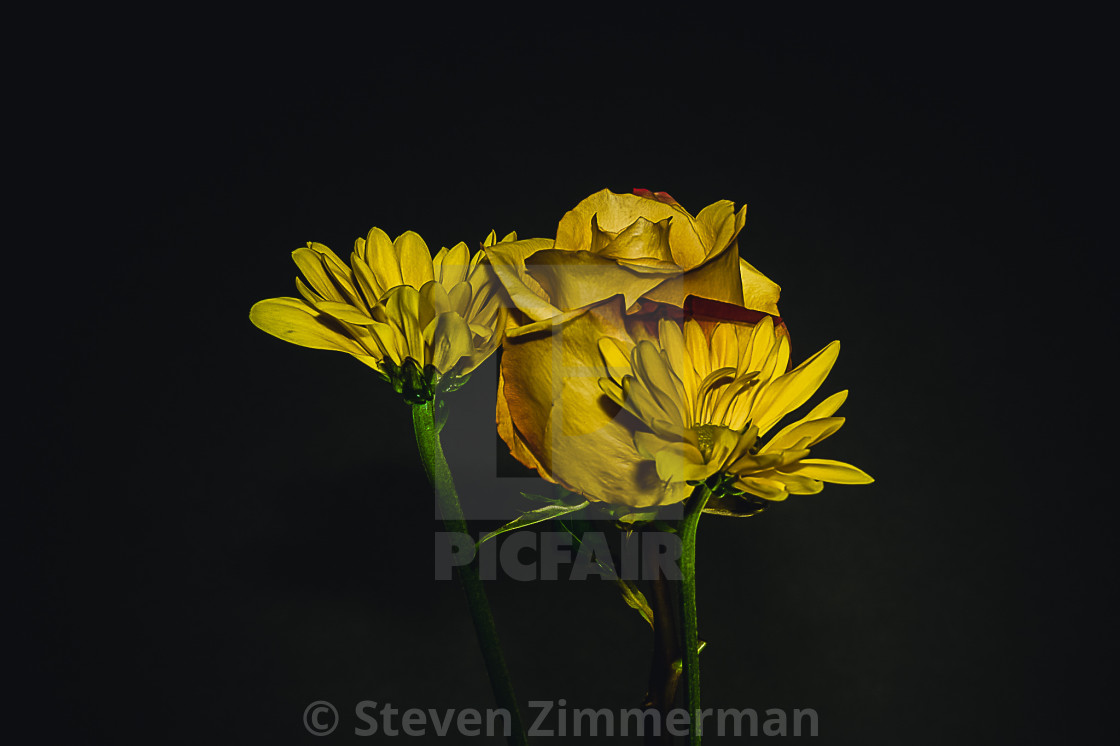 """""""Flowers in My Studio Two"""" stock image"""
