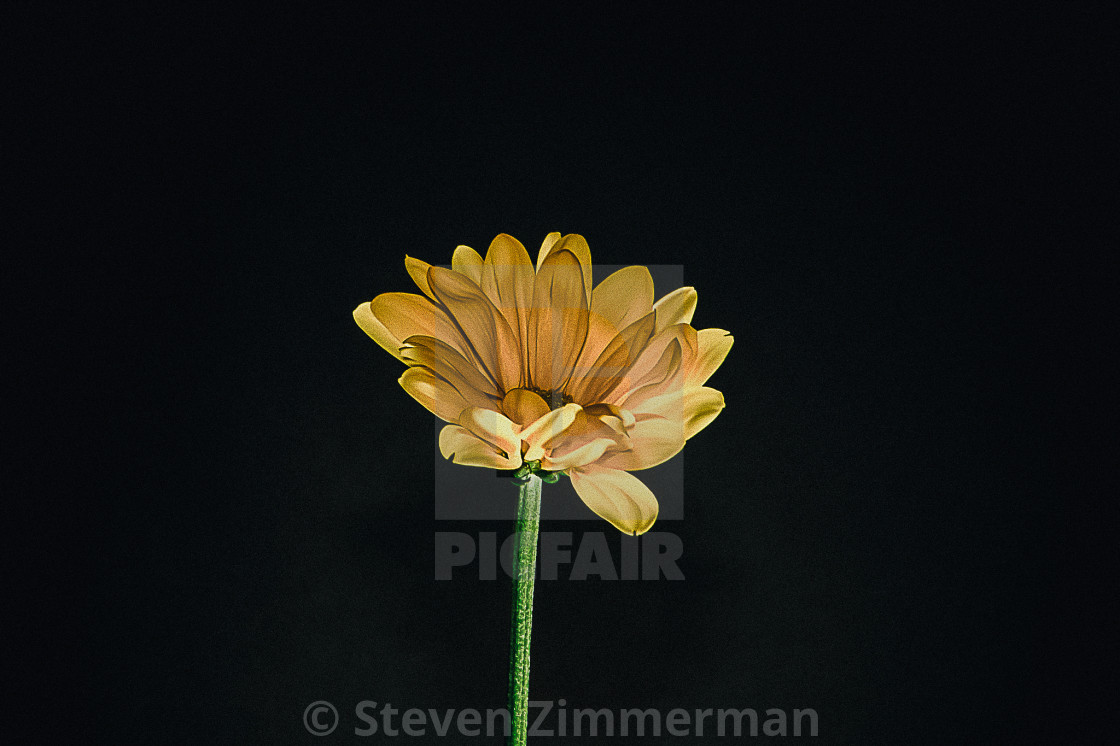 """Flowers in My Studio Three"" stock image"