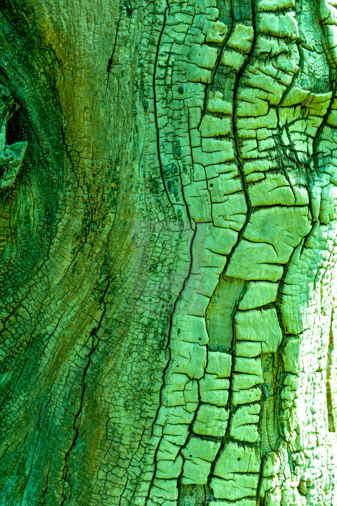 """Wildwood No3 Green"" stock image"