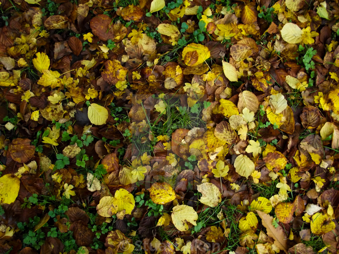 """Yellow Leaves"" stock image"