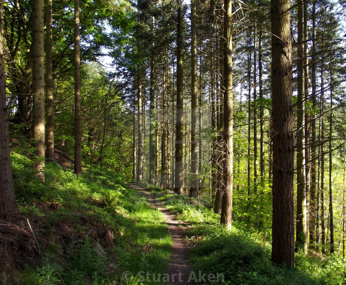 """Forest Walk No30"" stock image"