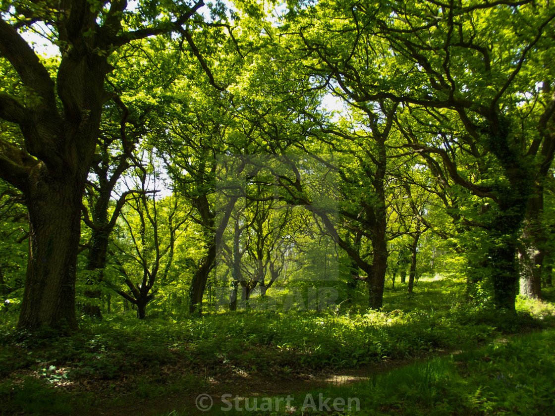 """Forest Walk No31"" stock image"