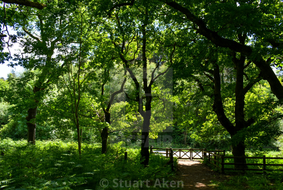 """""""Forest Walk No32"""" stock image"""