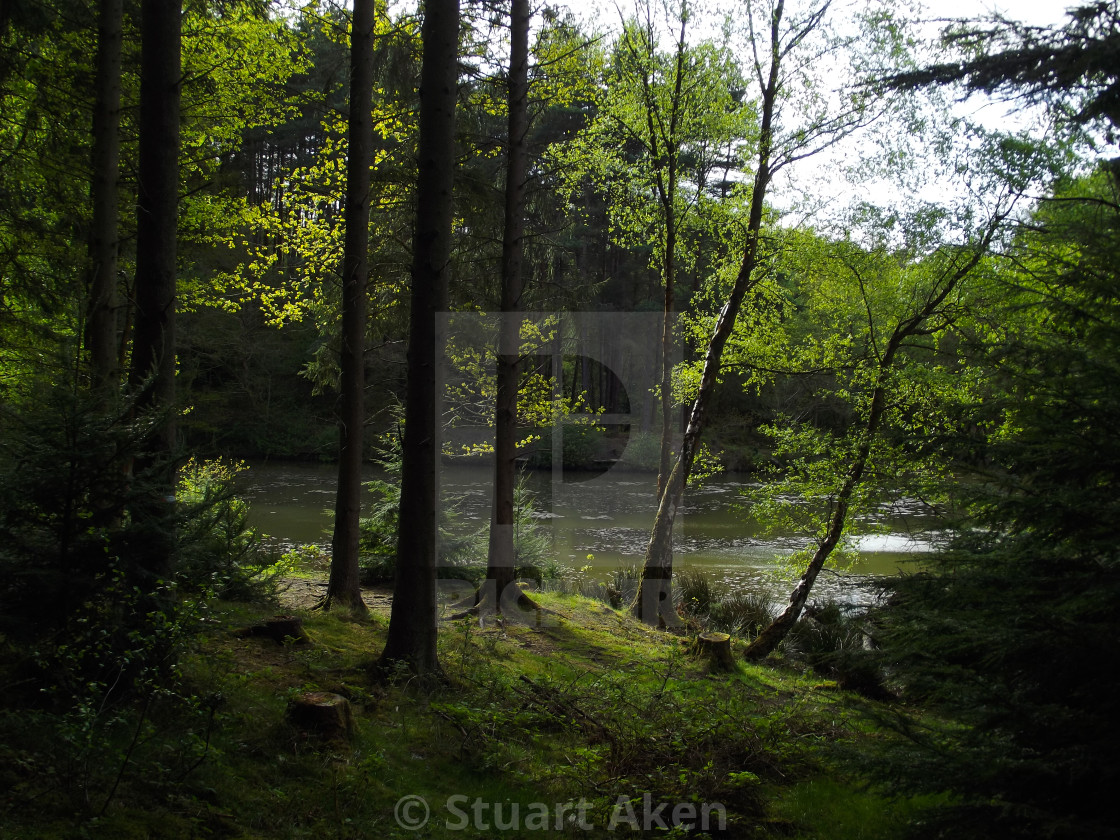"""""""Forest Walk No33"""" stock image"""