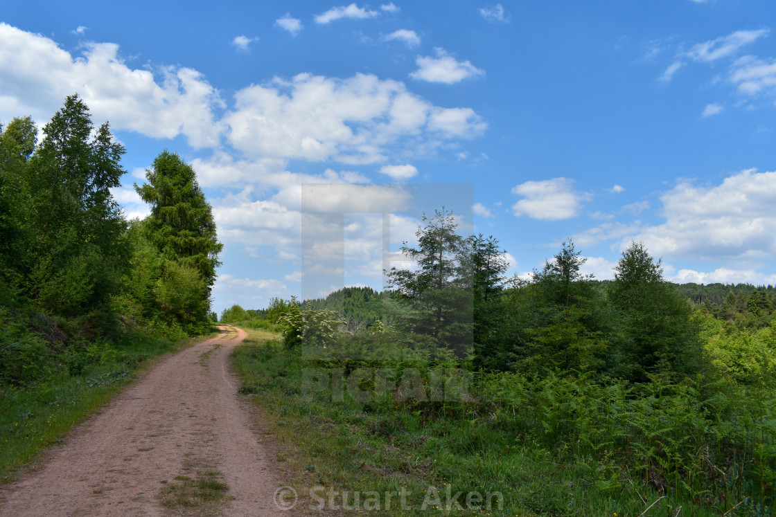 """Forest Walk No34"" stock image"