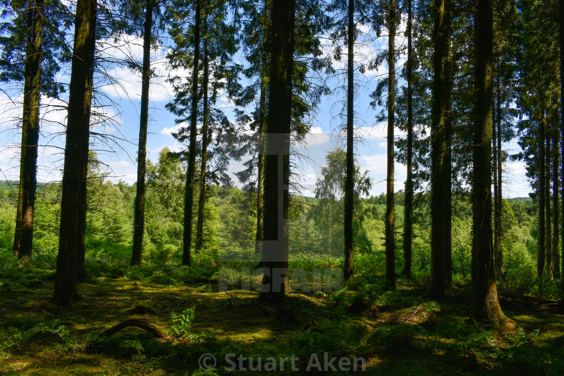 """""""Forest Walk No35"""" stock image"""