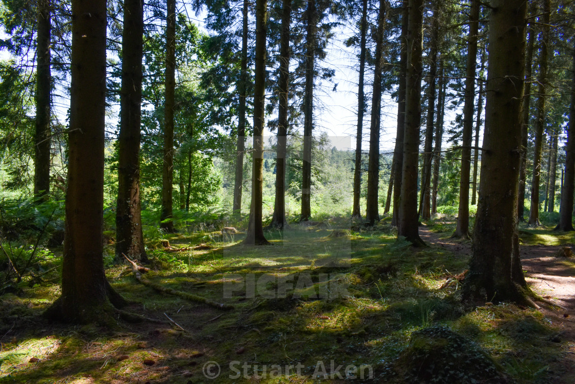 """""""Forest Walk No36"""" stock image"""