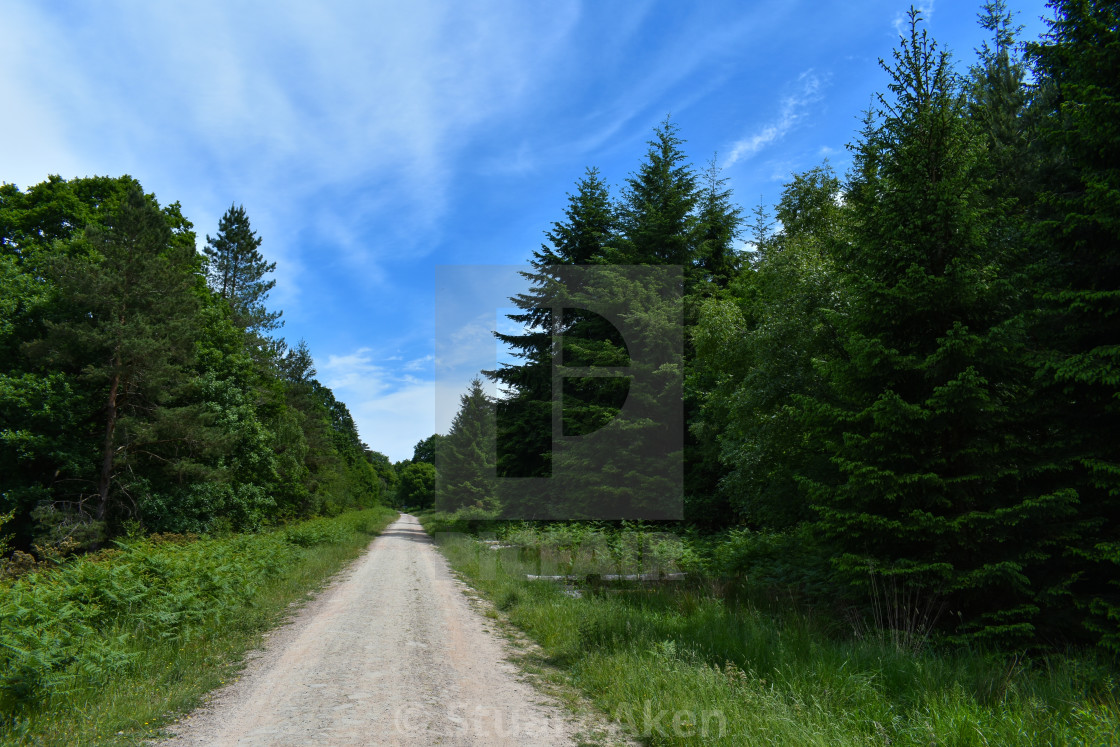 """Straight Forest Road"" stock image"