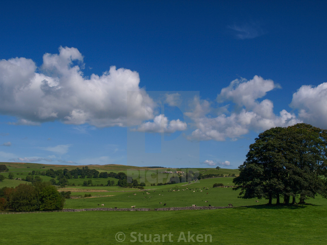 """""""Summer in Yorkshire Dales"""" stock image"""