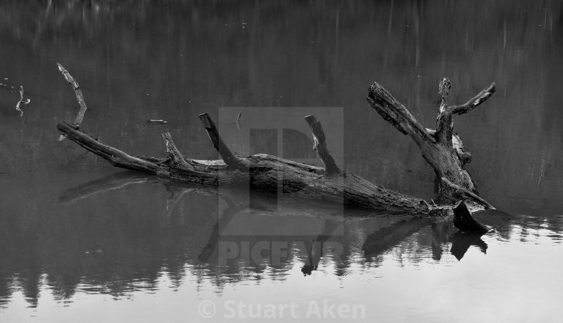 """Waterlogged"" stock image"
