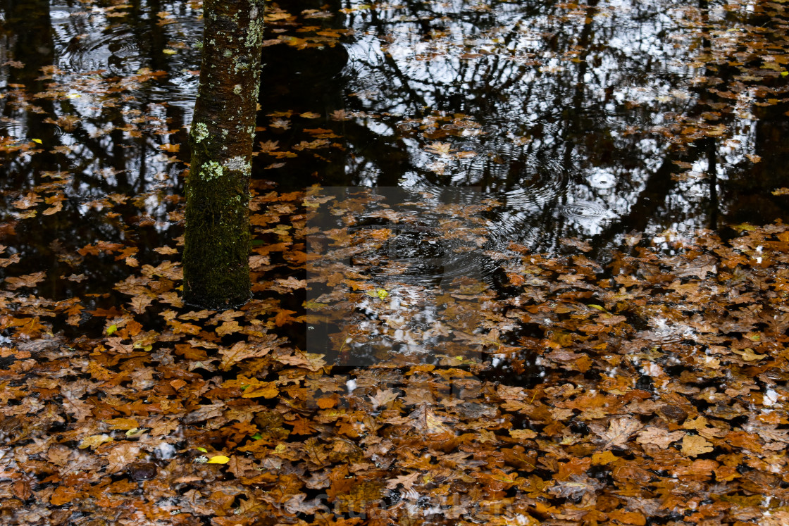 """""""When Autumn L:eaves Fall and Float"""" stock image"""