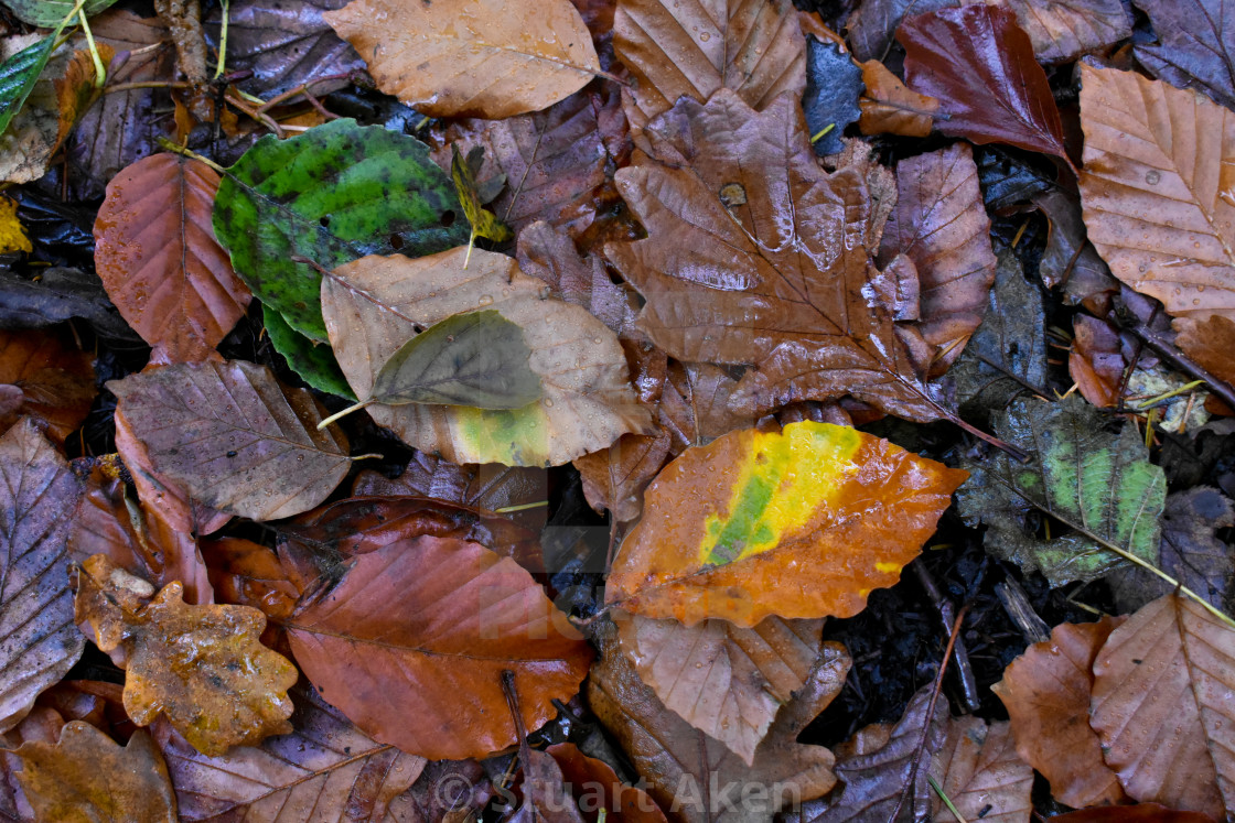 """Autumn Leaves #13"" stock image"
