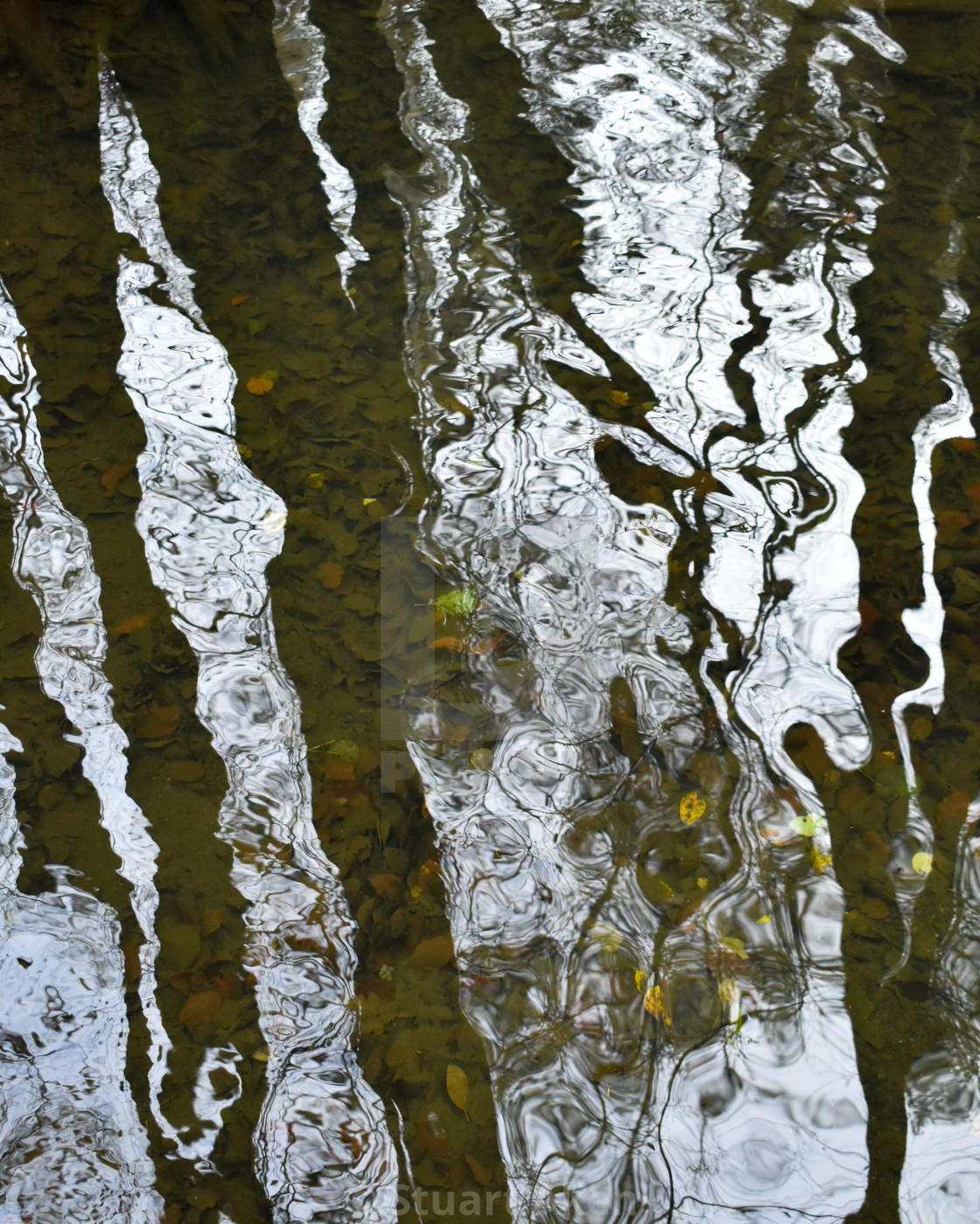 """Reflecting on Water #5"" stock image"