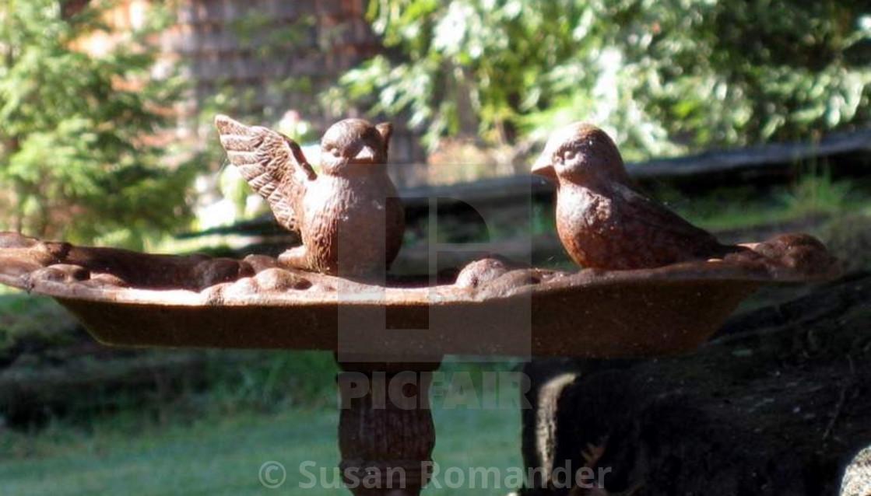 """""""Birdies in the bath"""" stock image"""