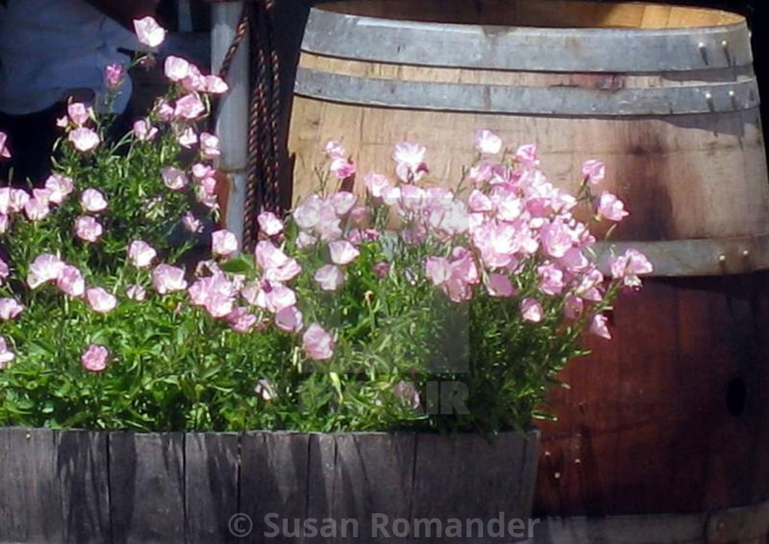 """""""Flowers in the wine barrel"""" stock image"""