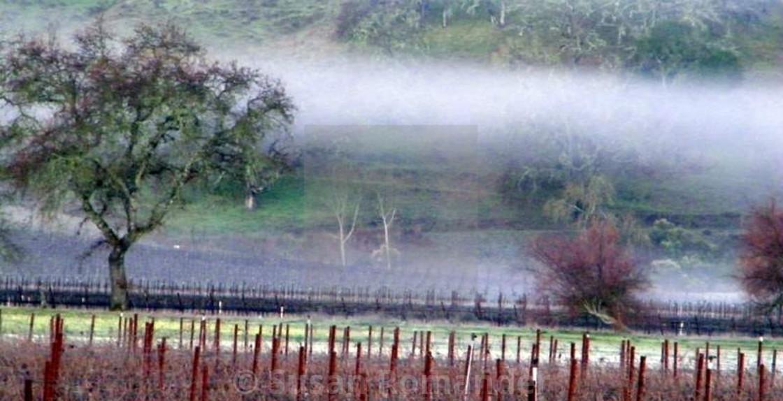 """Morning Fog"" stock image"