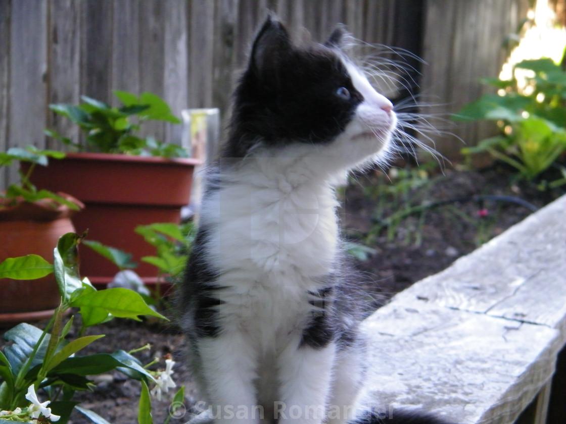 """""""Mojo Kitty"""" stock image"""