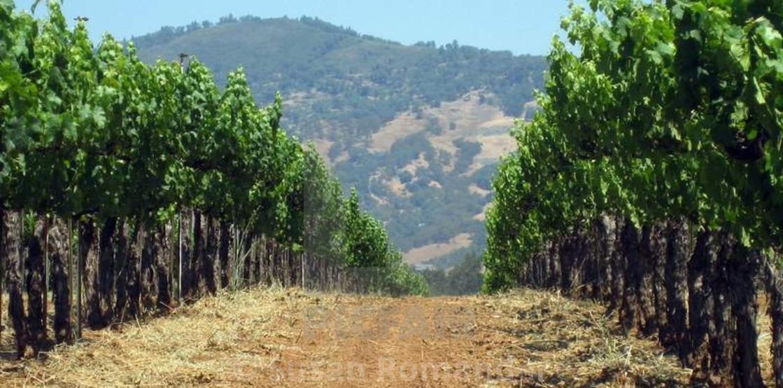 """Vineyard trails"" stock image"