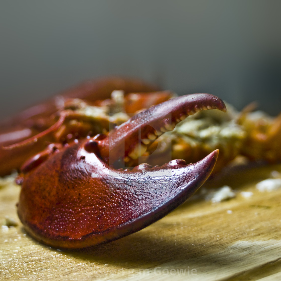 """""""A lobster"""" stock image"""