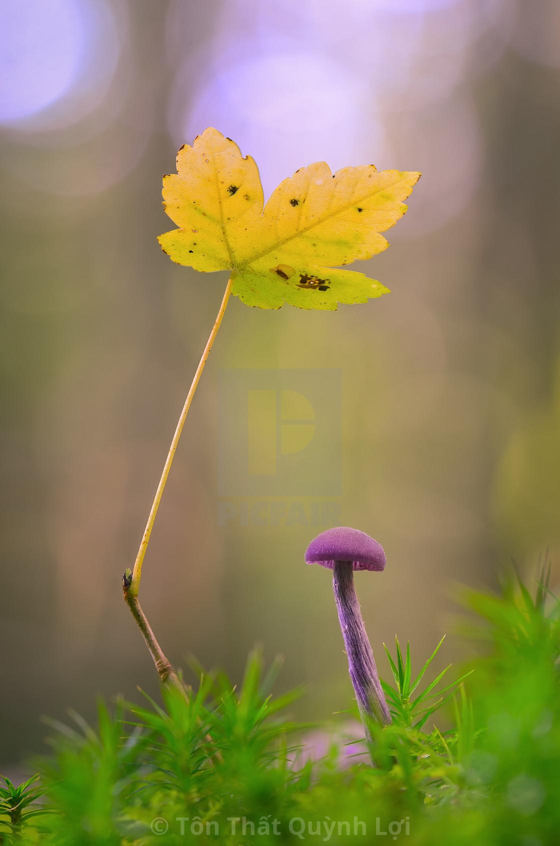 """""""Autumn is around the corner 1"""" stock image"""