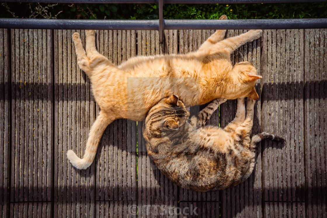 Cats sleeping on a wooden walkway
