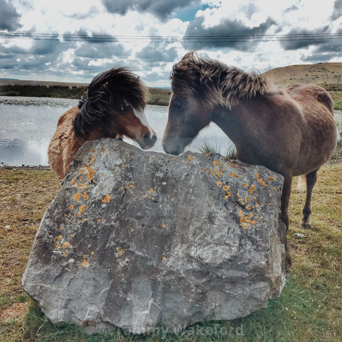 """""""Meeting of Mare and Foal"""" stock image"""
