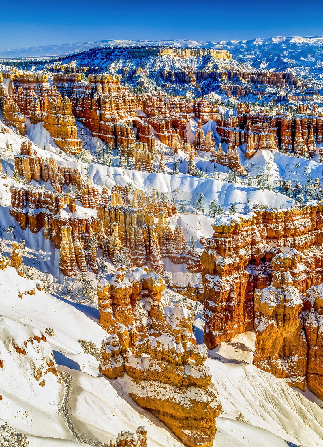 """""""Fresh snowfall in the Queen's Garden in Bryce Canyon National Park, Utah, USA."""" stock image"""