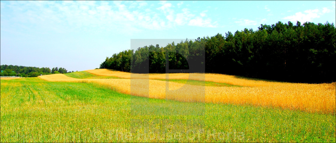 """""""Fields of Gold in Poland"""" stock image"""