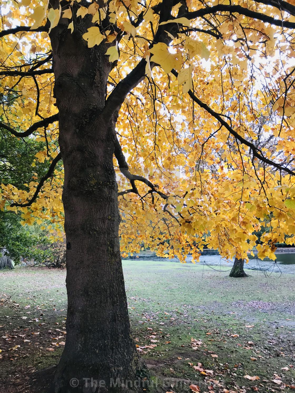"""""""Autumn in Claremont"""" stock image"""
