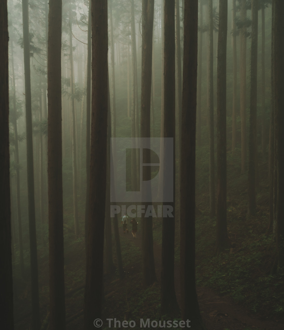 """foggy forest 2"" stock image"