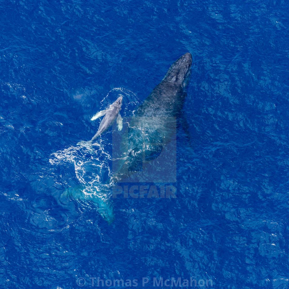 """Maui | Hawaii |"" stock image"
